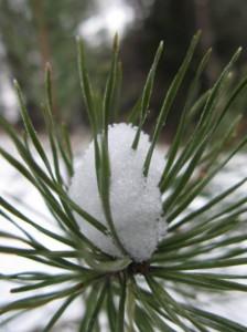 14 декабря — Наум Нрамотник, Филарет. По старому стилю 1 декабря. По народным приметам, если на Наума месяц или луна в рукавицах (с боковыми столбами), то будет мороз, а если молодой месяц лежит на спинке — к потеплению.