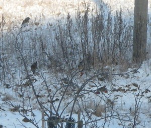 11 декабря - Сойкин день. Иринарх. По старому стилю 28 ноября. По народным приметам, если вороны устроили в небе хоровод — к снегопаду, на земле сидят — к оттепели, расселись на нижних ветках — к ветру.