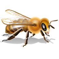 лечение малокровия медом