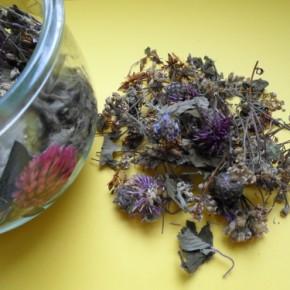 лекарственные растения при простатите
