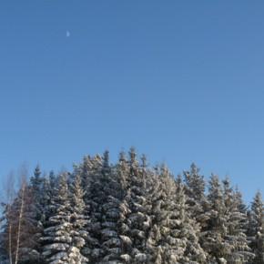 22 февраля – Никифоры-Панкраты.По старому стилю 9 февраля.По народным приметам, если ударит в этот день мороз, то затянется надолго.