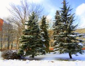 20 января — Иоанн Креститель, Иван-бражник. По старому стилю 5 января. По народным приметам, если эхо далеко уходит, то жди сильного мороза.