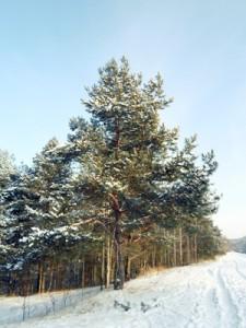 18 декабря — Савва-сальник. По старому стилю 5 декабря. По народным приметам, если на Савву дует сильный ветер, то жди ветра до конца месяца после Петра. В Саввин день смотрели, как вьётся дым зи трубы: дым столбом — к морозу, к ведру; дым волоком — к ненастью; дым без ветра бьёт к земле — жди снега.