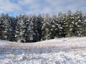 13 декабря — Андрей Первозванный. По старому стилю 30 ноября. По народным приметам, если в Андреев день снег пойдёт и уляжится, то ещё десять дней пролежит.
