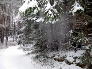 24 декабря - день Данилы, Луки и Никона. По старому стилю 11 декабря. По народным приметам, если восход солнца красный, но вскоре солнце закрылось облаками, то жди снегопада.