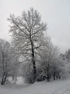 22 декабря - Анна Зимняя. По старому стилю 9 декабря. По народным приметам, если на Анну Зимнюю солнечно, то 31 декабря будет ясно и морозно, если хмуро и на деревьях лежит иней, то новогодье будет пасмурное и тёплое.