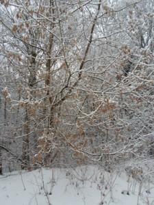 25 декабря - Спиридон-солнцеворот. По старому стилю 12 декабря. По народным приметам, если воробьи вдруг начинают собирать пух и перья и тащат их в свои гнёзда, то жди сильных морозов