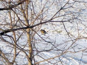 27 декабря - Филимонов день. По старому стилю 14 декабря. По народным приметам, если в Филимонов день вороны раскаркались всей стаей, а гуси хлопают крыльями, поджимают под себя одну ногу, то жди сильных морозов.