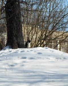 26 января - День Ерёмы. По старому стилю 13 января. По народным приметам, если кошка лижет лапу — к ведру, в печь лезет — к теплу, по половицам катается — тоже к теплу.