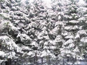 28 декабря - Стефан. По старому стилю 15 декабря. По народным приметам, если солнце в тучу садится — к бурану; уголь в затопке сам загорается — к морозам; деревья в лесу трещат — к сильной стуже.