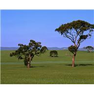 Два дерева (притча)