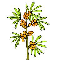 Лечение лямблиоза растительными средствами