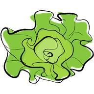 Латук обладает успокаивающим, снотворным, противосудорожным, слабительным и мочегонным действием.