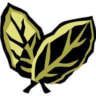 C лечебной целью используют листья и плоды.