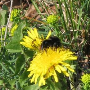 По старому стилю 19 июня. По старому стилю 19 июня.По народным приметам, если пчёлы летят к своим ульям – скоро дождь.