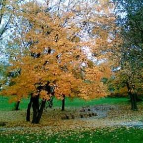 13 октября – Григорий. Если к этому дню журавли улетели зимовать на юг, зима будет холодной и ранней.