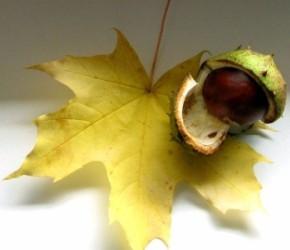 15 октября – Киприян и Устинья.Дата по старому стилю 2 октября.Если в этот день сильный дождь и ледяной ветер - зима будет студёная.