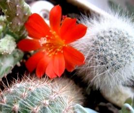 Установлено, что на человека положительно влияют те растения, которые ему нравятся. Не держите дома растений, которые вызывают у вас неприятные чувства.
