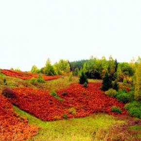 11 сентября — Иван Постный пролеток. По старому стилю 29 августа. По народным приметам, если с Ивана Постного журавли потянули на юг, то осень будет короткая, а зима — ранняя.