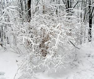 7 декабря - Катерина-санница. По старому стилю 24 ноября. По народным приметам, если на Екатерину оттепель, туман и слякоть. То морозов не жди раньше Варварина дня (17 декабря) — Варварских да Никольских (19 декабря).