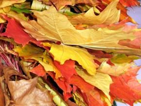 10 сентября — Моисей Мурин и Анна-скирдница. По старому стилю 28 августа. По народным приметам, если осенью берёзы желтеют с верхушки, то следующая весна будет ранняя, а если снизу, то поздняя.