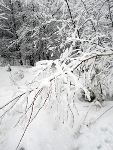 6 декабря - Митрофан. По старому стилю 23 ноября. По народным приметам, если на Митрофана моросит снег и ветер с севера, то на Семёна Столбняка (6 июня) будет ветер с севера и дождь побрызгает.