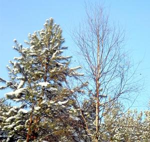 25 ноября - Иван Милостивый. По старому стилю 12 ноября. По народным приметам, если идёт дождь на Иоанна Милостивого, то до Введения (4 декабря) будут оттепели.