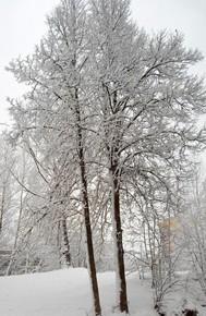 18 декабря - Савва-сальник