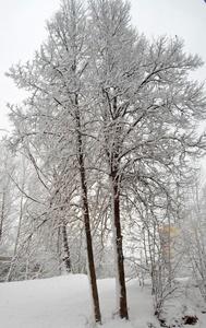 27 ноября - Филипповка. Заговенье на Рождественский пост. По старому стилю 14 ноября. По народным приметам, если на Филиппа облачно или снежно, то май будет ненастный.