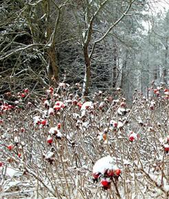 26 декабря – Евраст. Начиная с 26 декабря по 6 января, определяли погоду на весь предстоящий год.