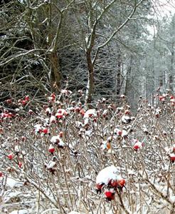 """5 декабря - Прокоп. По старому стилю 22 ноября. Про этот день говорили: """"Прокоп разрыл сугроб, по снегу, дорогу копает""""."""