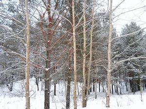 10 декабря - Романов день. По старому стилю 27 ноября. По народным приметам, если ляжет большой иней, наметёт сугробы снега и глубоко промёрзшая земля, то урожай будет богатый.