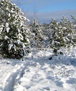 30 ноября — Григорий Зимоуказатель. По народным приметам, если мыши во льну гнездо совьют, то в зиму большие снега будут.