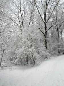 """24 ноября — Фёдор Студит. По старому стилю 11 ноября. По народным приметам, если этот день тёплый, то зима будет тёплая. Если холодный — холодная. Короткие оттепели — к позднему лету. С этого дня начинались устойчивые морозы: """"На Студита стужа, что ни день, то лютей да хуже"""". """"Фёдор-студит — землю студит, ветры при нём голодными волками воют""""."""
