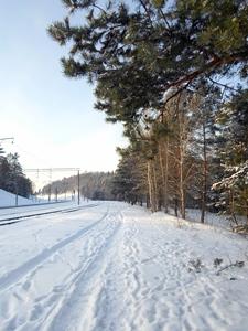 3 декабря - День Прокла и Проклы. По старому стилю 20 ноября. По народным приметам, если на Прокла идёт сснег, то 3 июля пойдёт дождь. Если запел снегирь, а сорока лезет под стреху — быть вьюге.