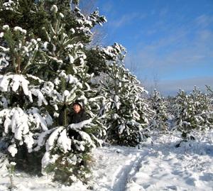 4 декабря - Введенье. По старому стилю 21 ноября. По народным приметам, если снег выпадет до Введенья, то он может растаять, если после — то не растает до весны.