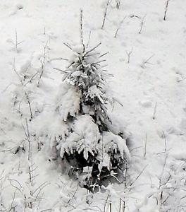 26 ноября - Иван Златоуст. По старому стилю 13 ноября. По народным приметам, если вороны каркают, будет оттепель.