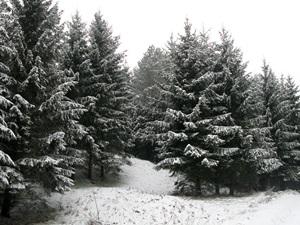 23 ноября — Ераст и Родион. По старому стилю 10 ноября. По народным приметам, если с утра большой туман, то жди оттепели.