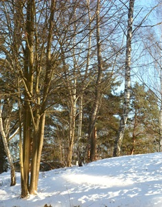 14 января - Васильев день. Свиной праздник. По старому стилю 1 января. По народным приметам, если в Васильев день сильный мороз и малый снег — к хорошему лету.