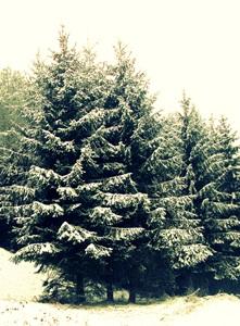 15 января - Сильвестр. По старому стилю 2 января. По народным приметам, если дрова горят с треском будет мороз.