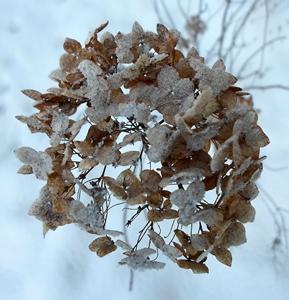 31 января — Афанасий - ломонос. По старому стилю 18 января. По народным приметам, если в полдень солнце светит, то весна будет ранняя, если на Афанасия вьюга да метель — весна затянется.