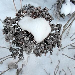 28 января — Павел Фивейский. По старому стилю 15 января. По народным приметам, если ночь звёздная на Павла — к урожаю льна. Если на Павла ветер — год будет сырой. Звёзды «сыплются» с неба — к морозу.