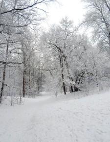 9 января - Стефанов день. По старому стилю 27 декабря. По народным приметам, если в морозный день к ночи теплее, то жди долгой стужи.
