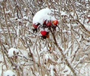 25 февраля – Мелетей и Алексей. По народным приметам, если на ночном небе много звёзд, будет богатый урожай. А чем холоднее последняя февральская неделя, тем теплее будет март.