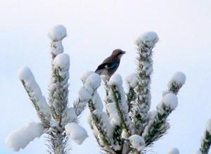 16 февраля - Семён и Анна. Починки. По старому стилю 3 февраля. По народным приметам, если сильная тяга в печи — на мороз, слабая — к теплу. С Починок и по Власия (24 февраля) бывает семь крутых утренников. Лес трещит — мороз будет стоять долго. Лес шумит — к снегу, к оттепели.