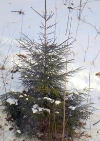 23 февраля - Прохор, Валентина-капельница.По старому стилю 10 февраля.По народным приметам, снег в этот день весну подгоняет.
