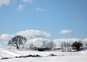 24 февраля – Власий, Васса, коровий праздник