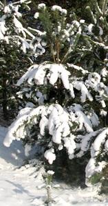 6 февраля - Аксинья-полухлебница, Аксинья-полузимница. По старому стилю 24 января. По народным приметам, какова Аксинья, такова и весна. На Полузимницу ведро — весна красна.