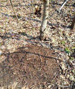 1 апреля - Дарья-грязные проруби. По старому стилю 19 марта.По народным приметам, каково 1 апреля – таково и 1 октября и наоборот.