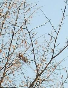 22 марта – Сороки. По старому стилю 8 марта.По народным приметам, если на Сороки тепло, будет сорок дней теплых, а если холодно – жди сорок холодных утренников.С 22 марта и до Зосимы-пчельника с (30 апреля) считается сорок утренних морозов. Если утренники с этого дня продолжаются постоянно – лето будет тёплое.